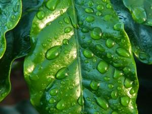 leaf-654121